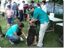 Exitoso operativo de vacunación de mascotas se realizó en Ñancul