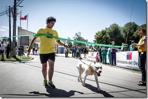Dog Run 2014 1