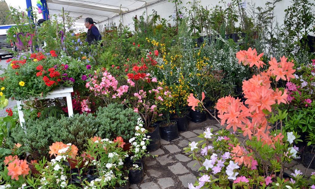 Expo flores y jardines abri sus puertas en temuco for Viveros en temuco