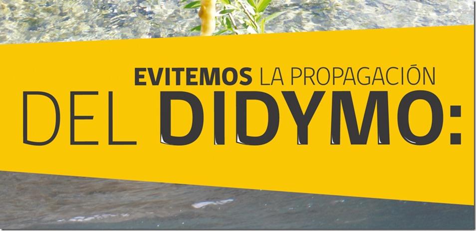 Didymo