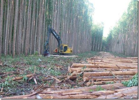 forestales plantaciones