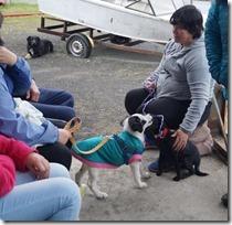 FOTO cierre operativos veterinarios 3