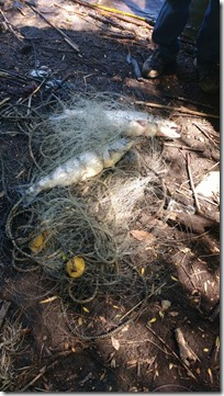 salmones en redes