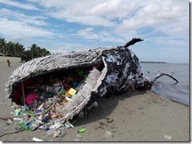 ballena Greenpeace