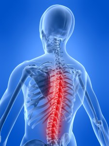 spinal-cord_0