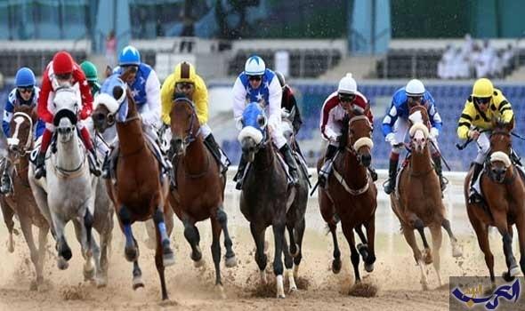 79 حصانًا في صراع مثير للفوز بألقاب سباق العوير