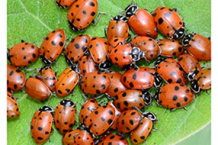 What Are Ladybugs Good For 4k Pictures 4k Pictures Full Hq