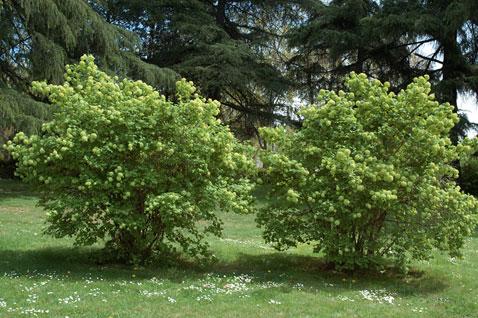 Plantas terrestres las plantas y su medio for Medio en el que habitan los arboles