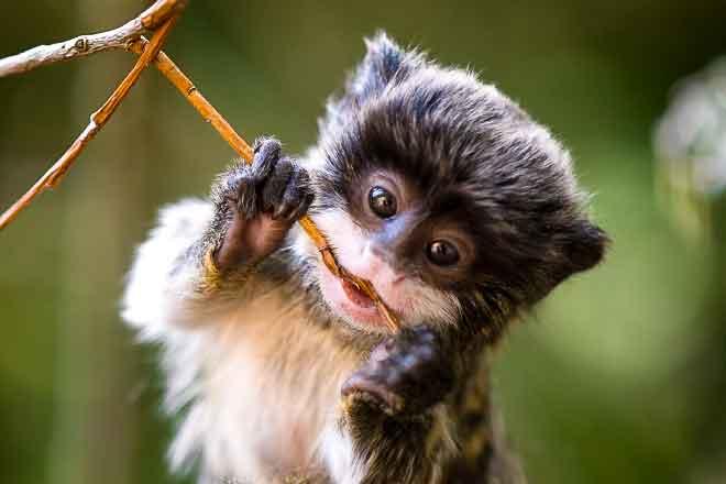 Image of: Rainforest Plants Rain Forest Animals Youtube Rain Forest Rescue