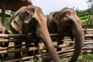 Full Day Elephant Tour with Loolu Tours