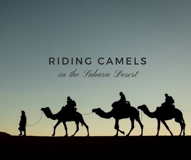 camel trek, silhouette, Merzouga, Morocco camel ride, riding camels in Morocco, arboursabroad