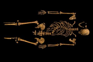 The full skeleton, with no sign of a withered arm - copyright University of Leicester