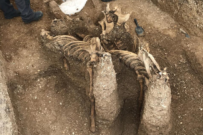 Further chariot burial discovered at Pocklington