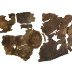 Unique Iron Age bark shield found in Leicestershire