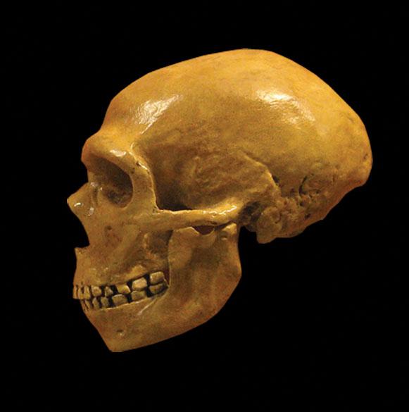 Neanderthal-Epigenome-DNA