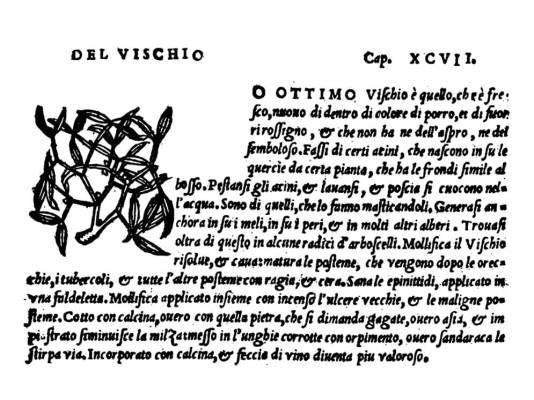 particolare di una pagina tratta da MATTHIOLI M. P., 1549, pp. 245-246)