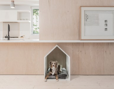 Dogs house forniture
