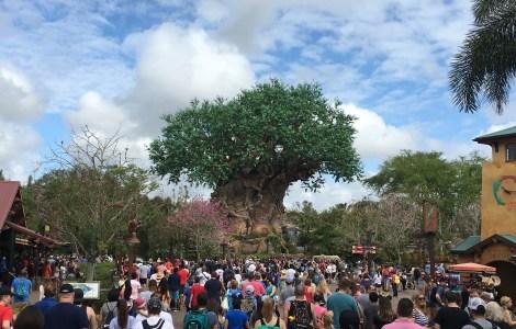 Disney World Orlando