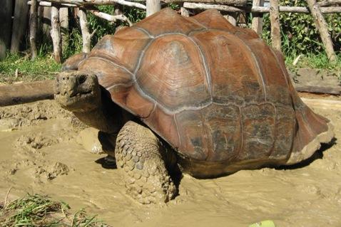 Boral Brick Clay Keeps Worlds Largest Tortoises Warm
