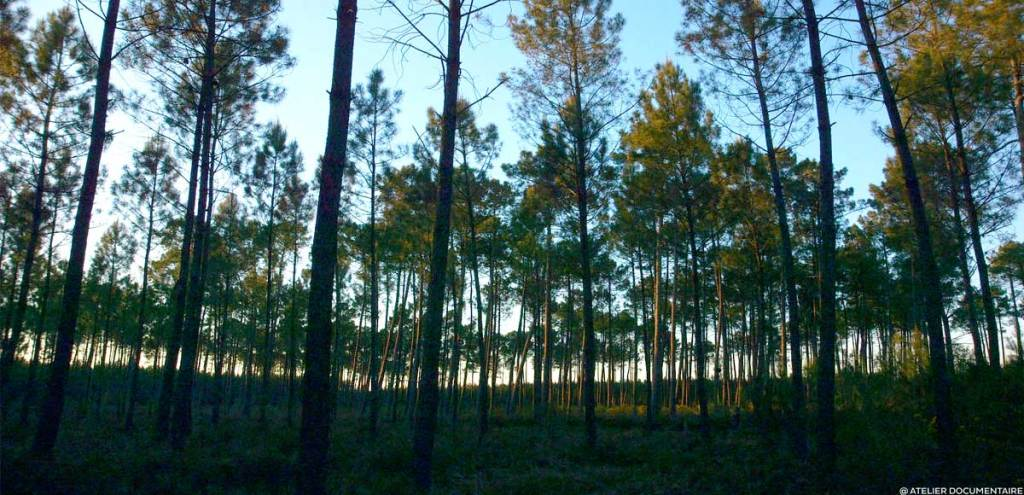 Documentaire Le Temps des Forêts