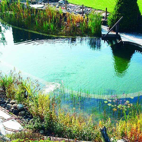 bassin bio avec beau jardin