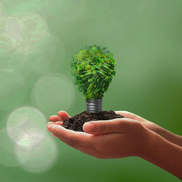 l'avenir des arbres et du monde entre nos mains