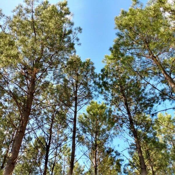 construire en bois VS déforestation quels sont les advantages?