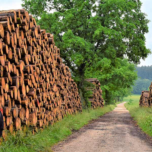 le bois des maisons en bois provient en grande partie de forêts durables