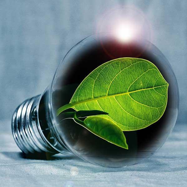 Innovation sous la canopée © PIRO4D - Pixabay