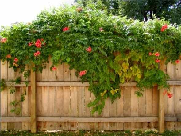 vines flower vertical garden