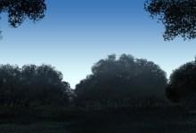 treescape-sketches