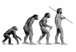 L'évolution de l'homme s'est faire par les processus de sélection naturelle et de sélection sexuelle