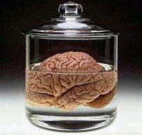 brain-matter