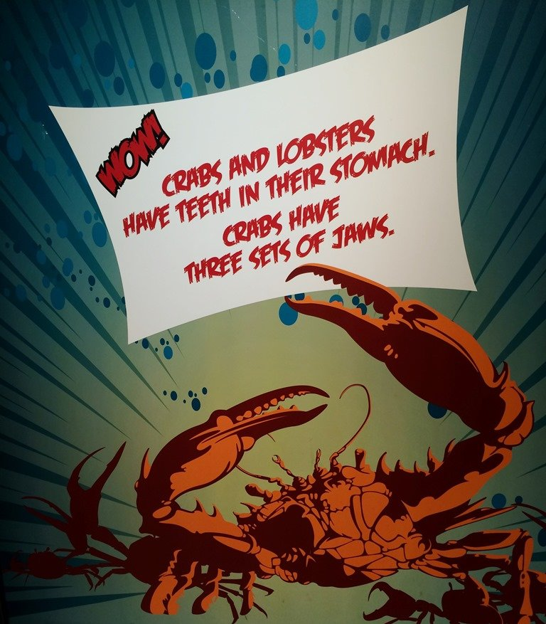Sealife Aquarium crab fact