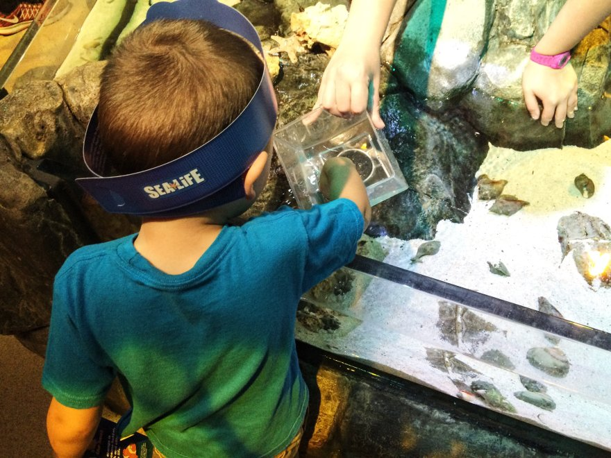 Sealife Aquarium touch pool