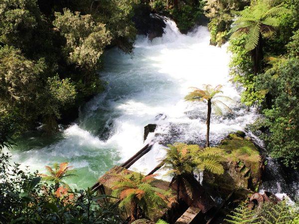 Rotorua 2