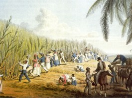 Plantación de Azucar en La Española en 1823