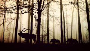 Animal Kingom