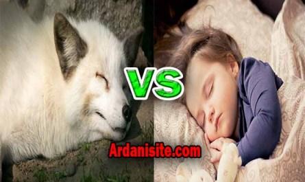 hibernate vs sleep