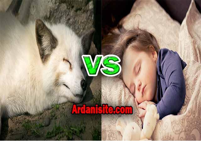 Perbedaan Sleep dan Hibernate apa sih fungsinya ?