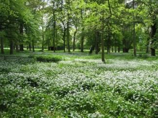 cours_jardinage_londel