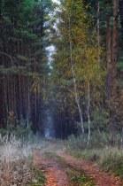 Краски осени в последний день сбора грибов в 2012 1