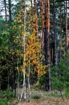 Краски осени в последний день сбора грибов в 2012 2