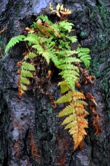Краски осени в последний день сбора грибов в 2012 5