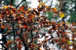 Краски осени в последний день сбора грибов в 2012 8