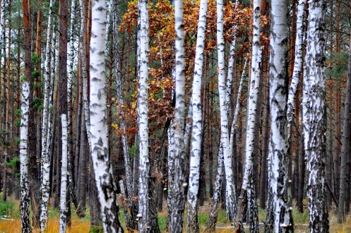 autumn_forest_in_kiev_0012