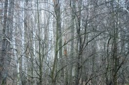 Фото природы. Пейзажи. Текстуры. Профессиональный фотограф в Киеве. 38