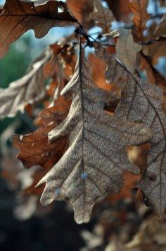 Фото природы. Пейзажи. Текстуры. Профессиональный фотограф в Киеве. 39