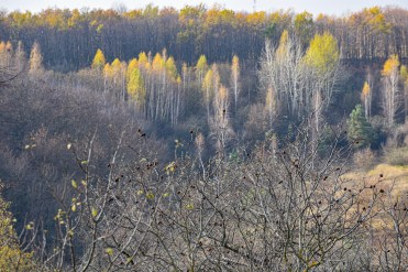 autumn landscape ukraine 0021