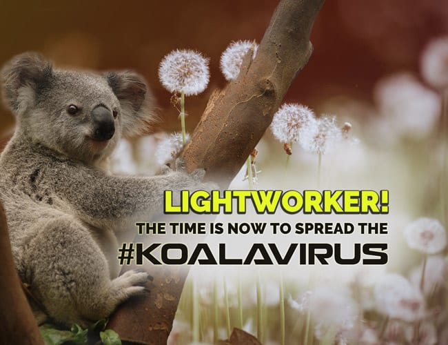 Lightworker: the time is now to sptead the Koalavirus